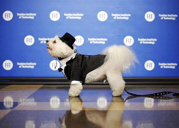 pet_apparel_fashion_show_new_york12.jpg