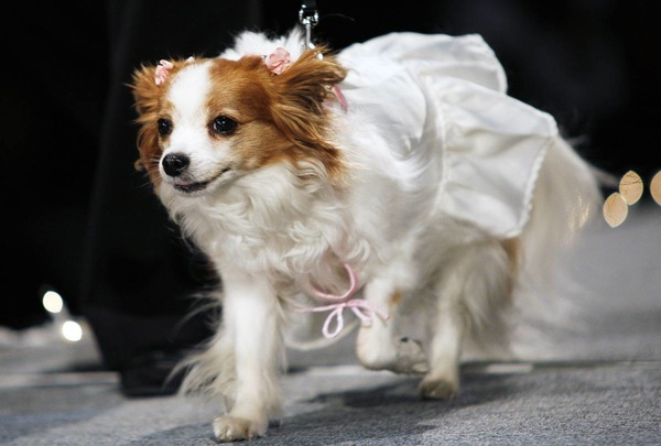pet_apparel_fashion_show_new_york13.jpg