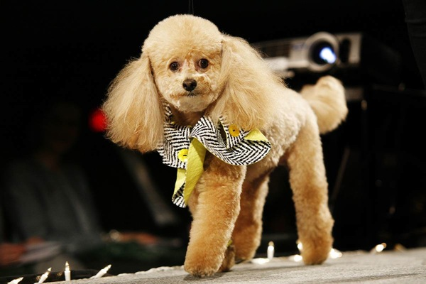 pet_apparel_fashion_show_new_york14.jpg