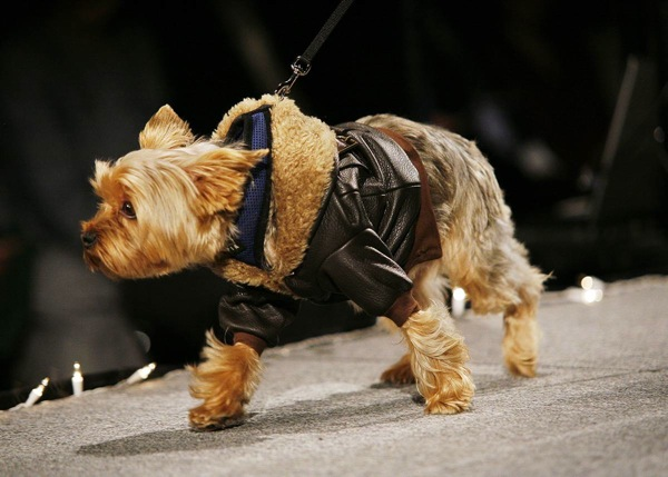 pet_apparel_fashion_show_new_york15.jpg