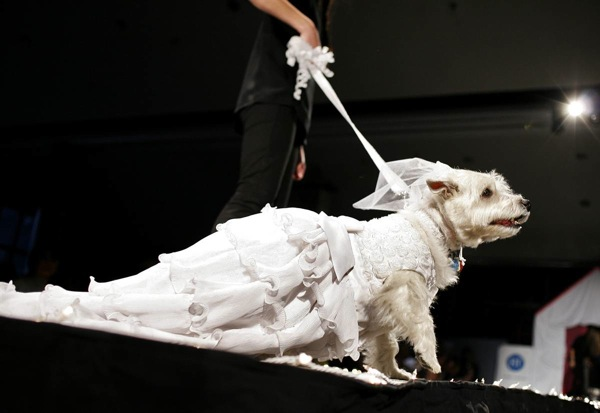 Pet Apparel Fashion Show in New York