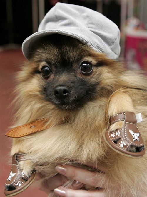 pet_fashion_week_moscow03.jpg