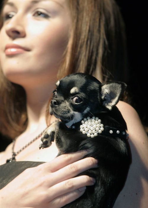 pet_fashion_week_moscow04.jpg
