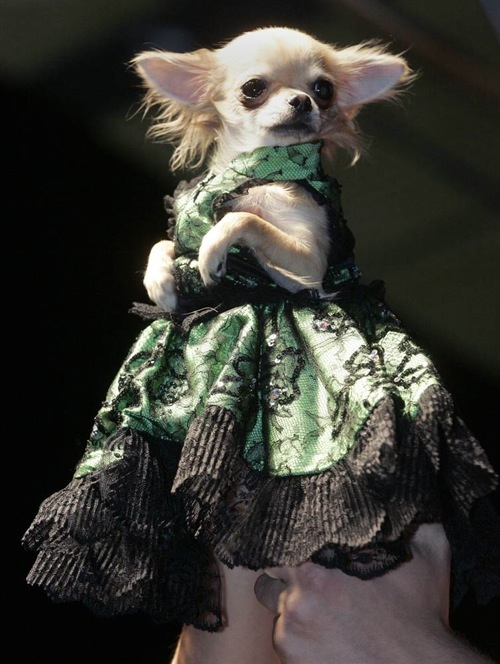 pet_fashion_week_moscow05.jpg