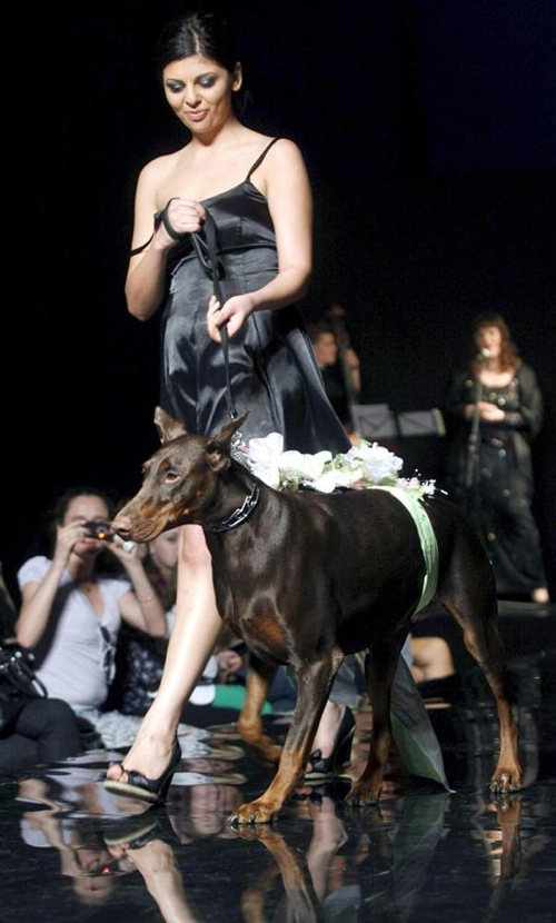 pet_fashion_week_moscow06.jpg