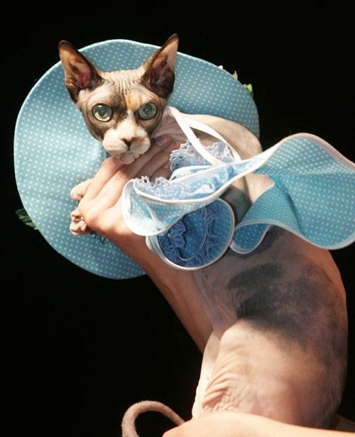 pet_fashion_week_moscow07.jpg