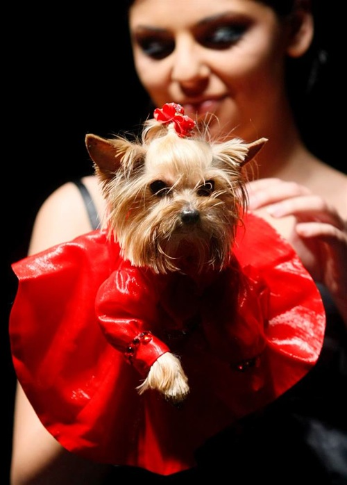 pet_fashion_week_moscow09.jpg