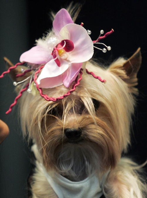 pet_fashion_week_moscow10.jpg