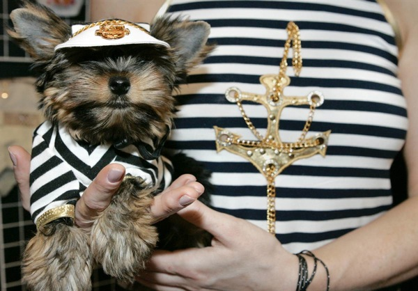 pet_fashion_week_moscow11.jpg