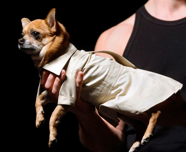 pet_fashion_week_moscow12.jpg