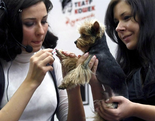 pet_fashion_week_moscow14.jpg