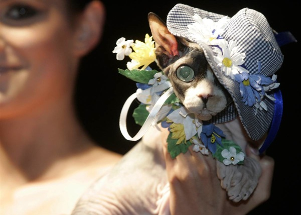 Fashion show for dogs and cats in Moscow