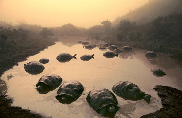 ss-100421-earth-auction-tortoise_ss_full.jpg