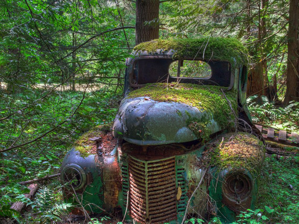 old-truck-forest_18741_990x742.jpg