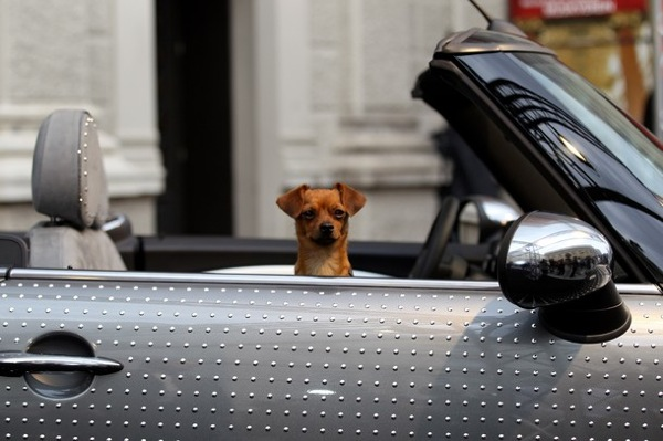 life_ball_vienna_2010_mr_brodmann_gery_keszler_dog_in_mini.jpg
