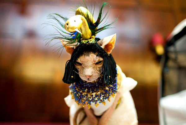 ss-100813-cat-fashion-04_ss_full.jpg