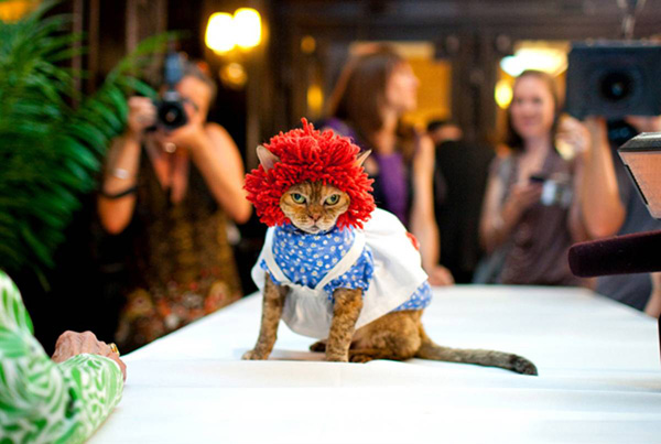 ss-100813-cat-fashion-11_ss_full.jpg