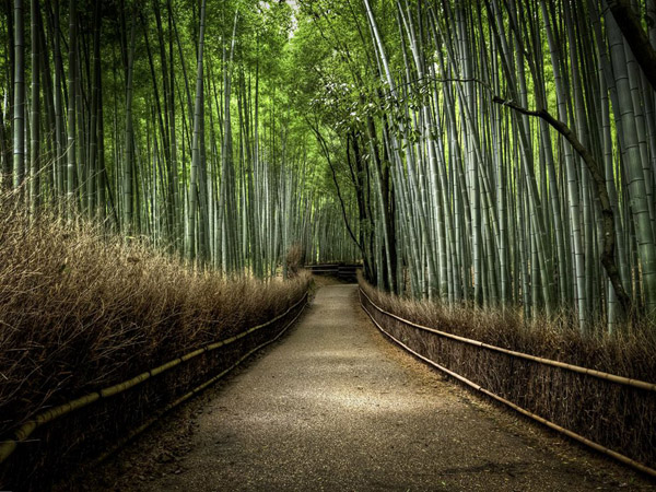bamboo-forest-japan_25291_990x742.jpg