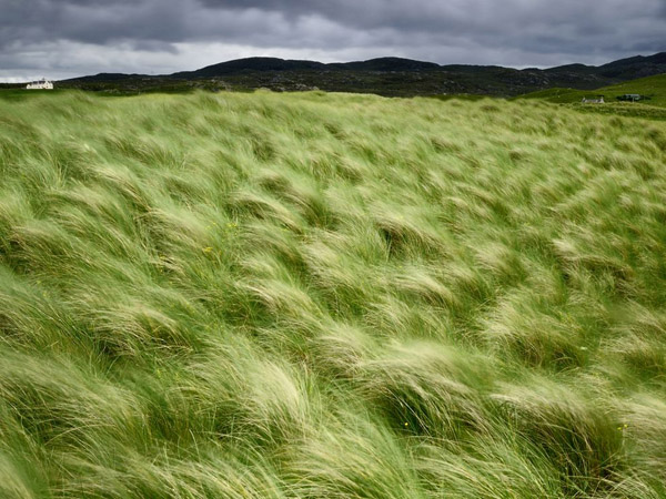 beach-grass-scotland_25292_990x742.jpg