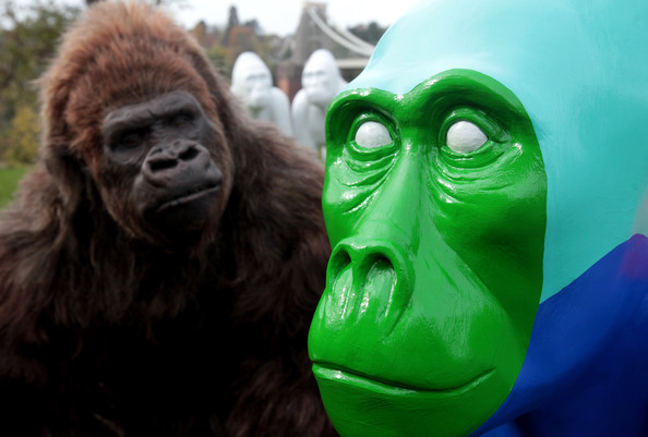 Gorilla+Sculptures+Take+Streets+Bristol+by_XLrhs2Vcl.jpg