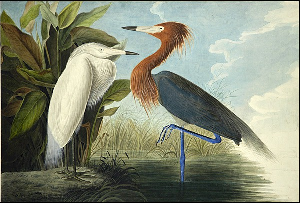 The four volumes of John James Audubon's Birds Of America sells for a world record £7m