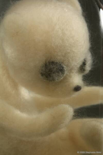 Teddy_Bear_Fetus_in_Jar_Ursulus_parvulus_Detail_op_400x600.jpg