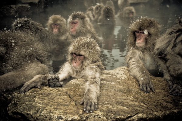 snow_monkeys-02.jpg