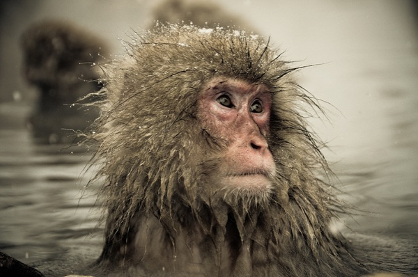 snow_monkeys-08.jpg