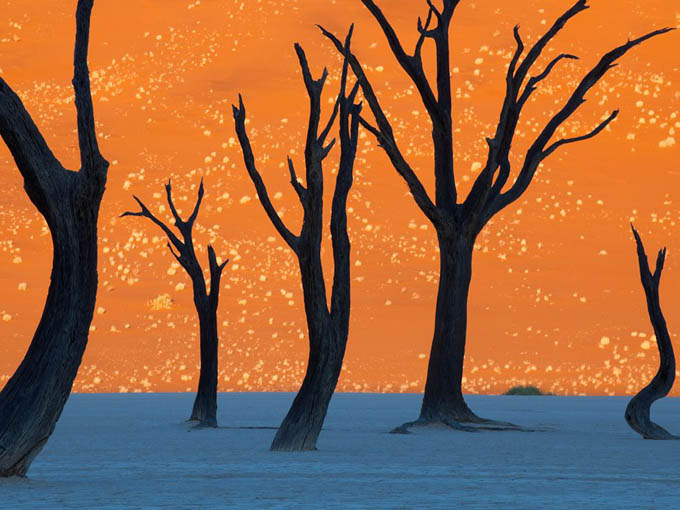 camel-thorn-trees-namibia_35259_990x742.jpg