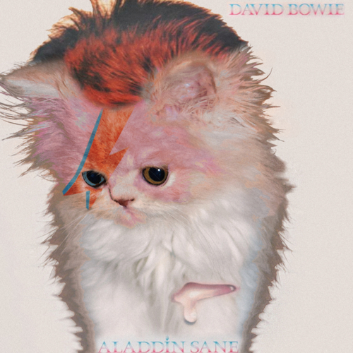 KittenCovers05.jpg