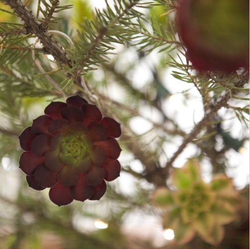 Succulent Ornament 01.jpg