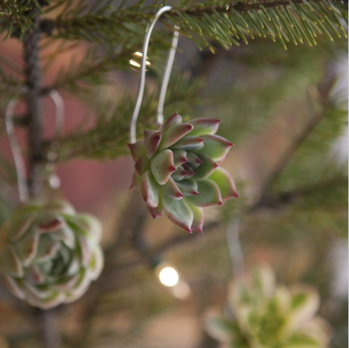 Succulent Ornament 02.jpg