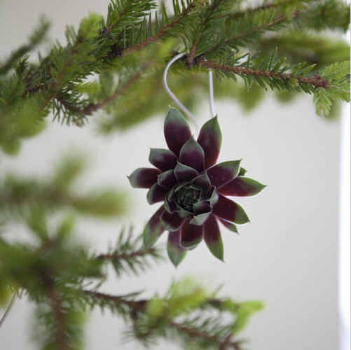 Succulent Ornament 03.jpg