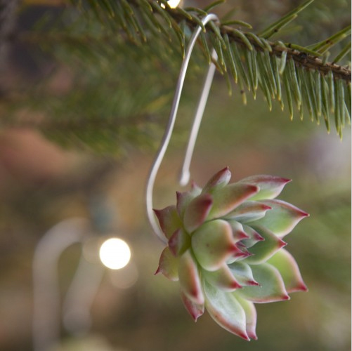 Succulent Ornament 04.jpg