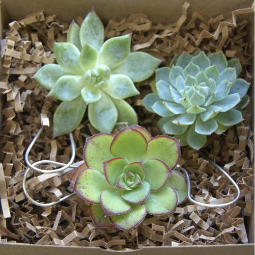 Succulent Ornament 06.jpg