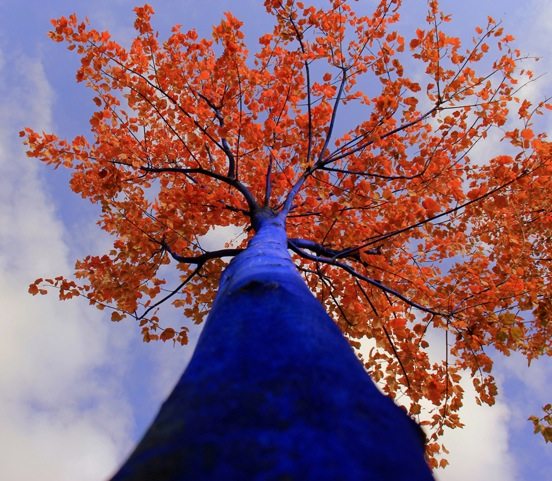 Blue-Tree-Autumn-Looking-Up_1000-pixels.jpeg
