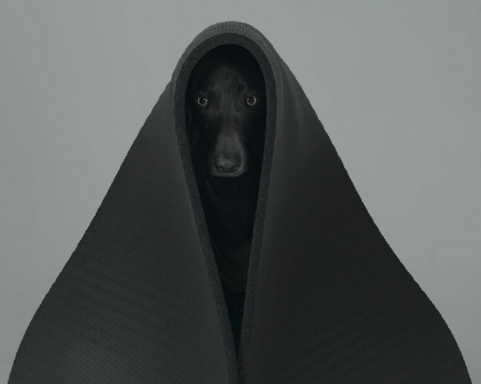 william-wegman-dog-portraits-4.png