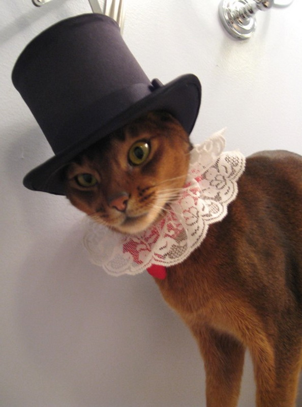 Hats-for-Cats-03.jpg