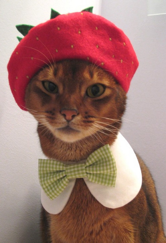 Hats-for-Cats-04.jpg