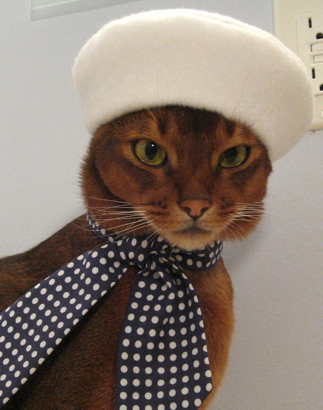 Hats-for-Cats-06.jpg