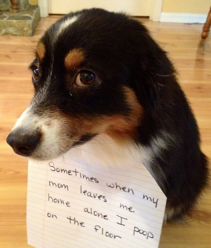 dogshaming1.jpeg
