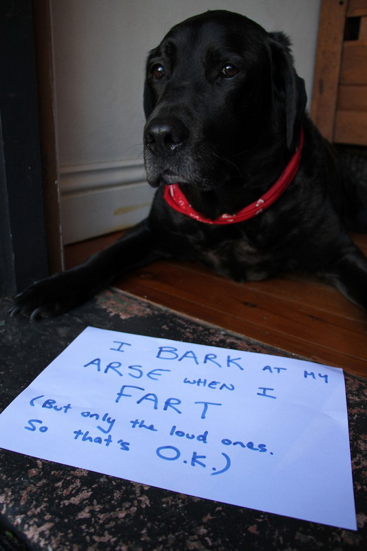 dogshaming12.jpeg