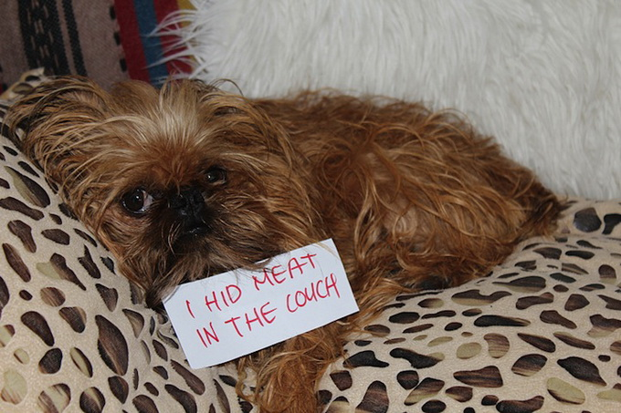 dogshaming13.jpeg