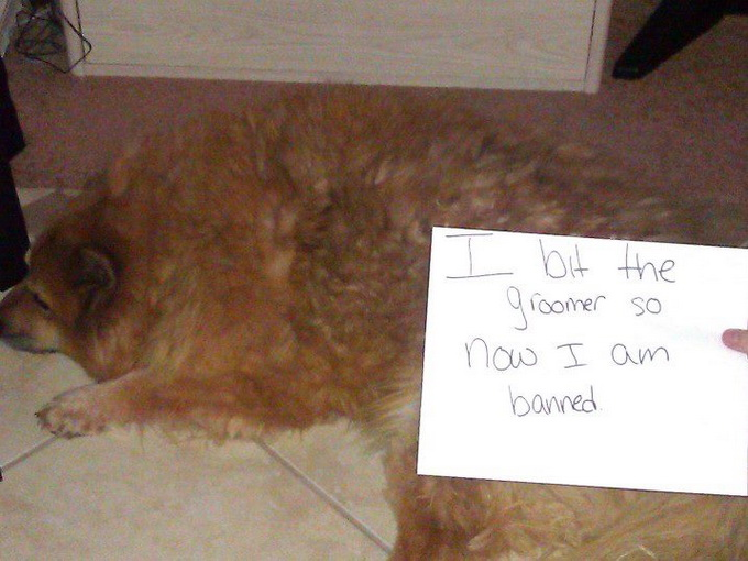 dogshaming14.jpeg