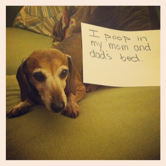 dogshaming7.jpeg