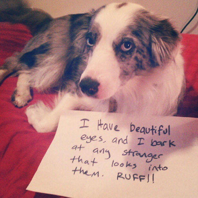 dogshaming8.jpeg