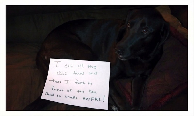 dogshaming9.jpeg