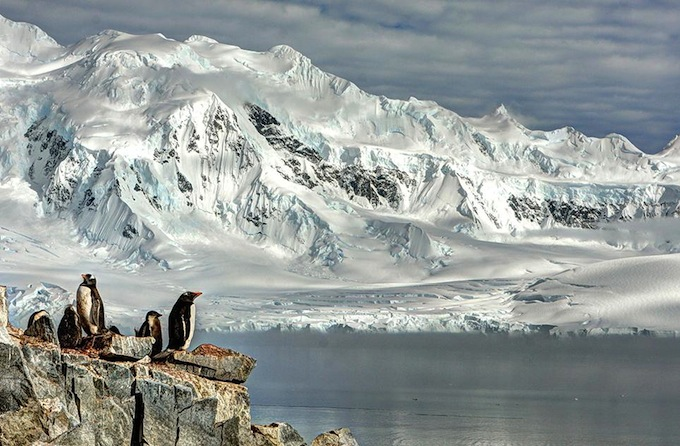 smithsonian-photo-contest-naturalworld-bird-penguins-arctic-glacier-neal-piper.jpg