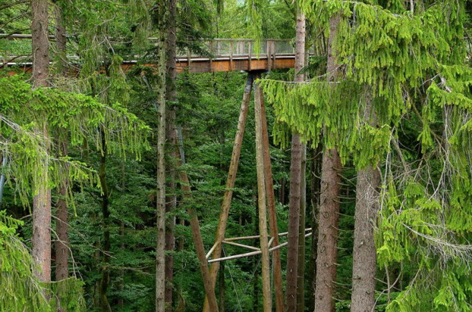 The-Worlds-Longest-Tree-Top-Walk8-640_1.jpg