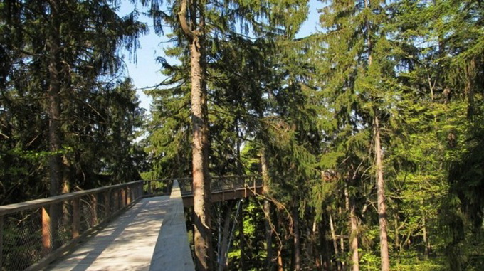 The-Worlds-Longest-Tree-Top-Walk8-640_3.jpg